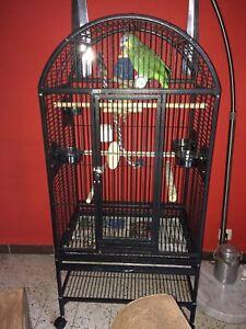 Cage-pour-perroquet