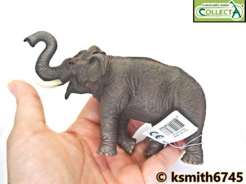 NUOVO CollectA Elefante Asiatico plastica solida giocattolo Wild Zoo Animale