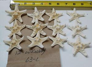 "12  WHITE BLEACHED FINGER STARFISH STAR FISH WEDDING SHELLS 3-4/"" ITEM # WSF3-12"