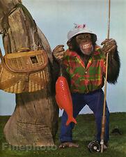 1959 Vintage MONKEY HUMOR ~ Chimpanzee FLY FISHING Rod Angling Animal Photo Art