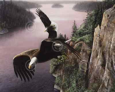 100% De Calidad Águila De Arte Estampado - Alas Sobre El St. Croix Kevin Daniel Vida Silvestre Poseer Sabores Chinos
