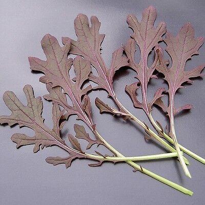 Kings Seeds Vegetable Baby Leaf 200 Seeds Mustard Red Frills