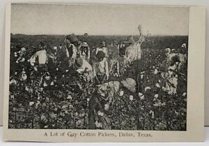 Lot-of-Cotton-Pickers-in-Texas-Owens-Bros-udb-Postcard-D13