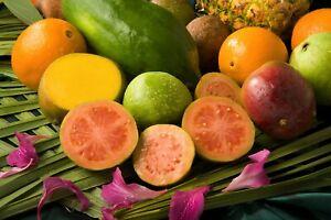 Tolles-Obst-Gartenpflanze-Terrasse-exotisch-i-APFEL-GUAVE-i-winterhart-Saatgut