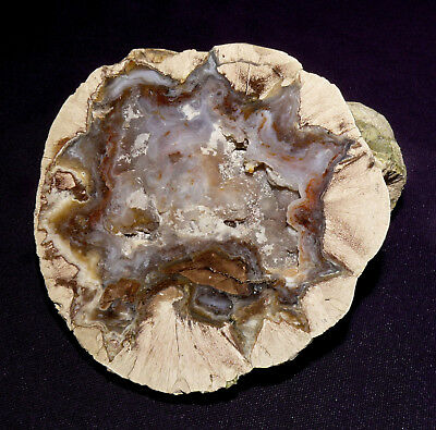Other Rocks & Minerals Thunderegg With Jasper 340,6g 88x84x47mm Buchanan Oregon Refreshing And Beneficial To The Eyes