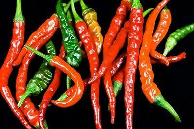 ORGANIC Hot Pepper - Ring of Fire - 50 seeds