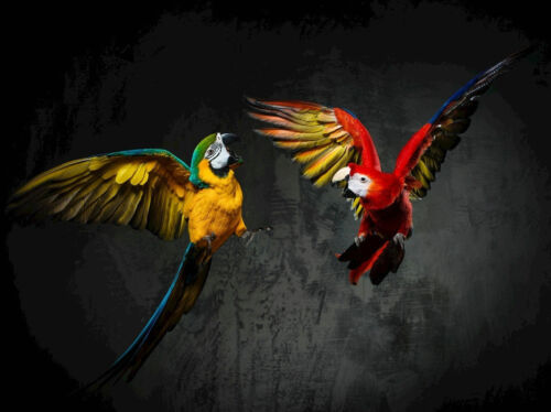 Modern Art Wall Home Decor Parrot Abstract Animal Picture Print Painting canvas