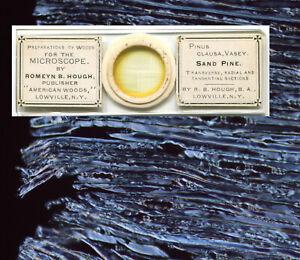 Romeyn Hough American Woods Microscope Slide - Sand Pine