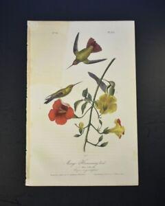 John-James-Audubon-Mango-Hummingbird-No-51-Plate-251
