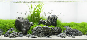 Image Is Loading 10 KG GREY MOUNTAIN ROCK STONE AQUARIUM IWAGUMI