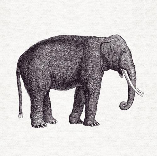 Cojín De Tela De Diseño Elefante xilografía//Panel de Artesanía Tapicería