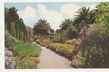 Tresco Gardens Scilly Old Postcard 355a