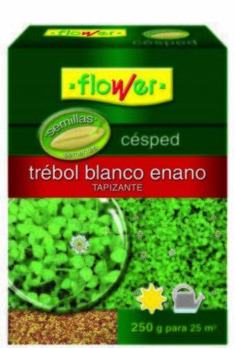 Super Fast Delivery Flower 10795 Dwarf Clover Seed
