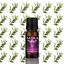Essential-Oils-Pure-10ml-Natural-Oil-Grade-Therapeutic-Aromatherapy-Fragrances Indexbild 27
