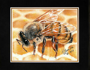 Matted-034-Honey-Bee-On-Comb-034-Art-Print-Honeybee-on-Hive-8-034-x10-034-Mat-by-Roby-Baer