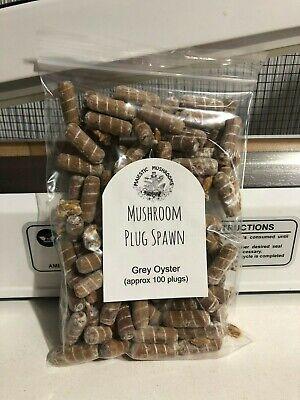 Oyster Mushroom Plug Spawn 100x
