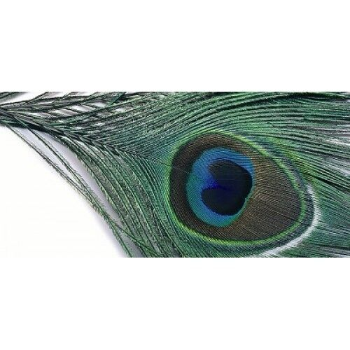 Peacock Feathers Choice of colours Peacock Eye Top Fly Tying Feathers