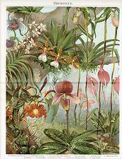 Farbtafel ORCHIDEEN 1890 Original-Lithographie