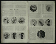 Entemology Stick Insect Phasmidae George H Rodman 1910 2 Page Photo Article 6511