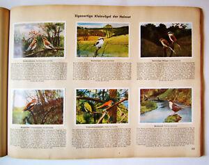 Aus-Deutschlands-Vogelwelt-Sammelbilderalbum-200-Zigarettenbilder-kplt-1932