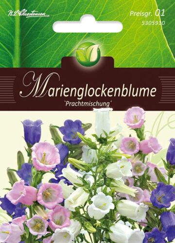 Marie cloches Fleur Chrestensen Splendeur Mélange 5305910,pg1 Campanula Medium fleur