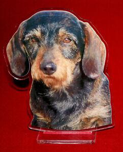 statuette-photosculptee-10x15-cm-chien-teckel-poil-dur-4-dog-hund-perro-cane