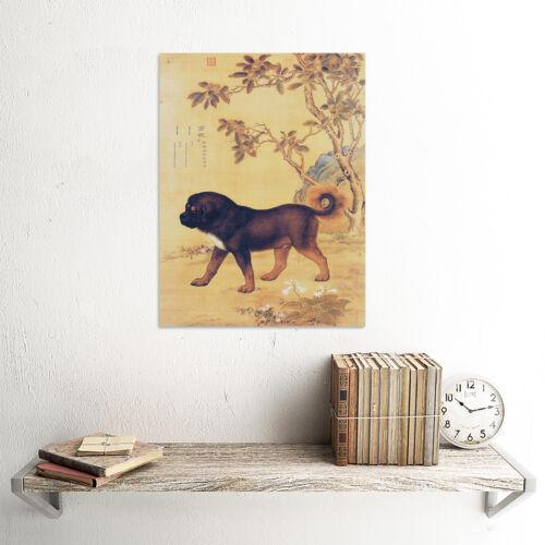 PAINTING ANIMAL CASTIGLIONE PRIZED DOGS CANGNI TIBETAN MASTIFF ART PRINT LAH371B