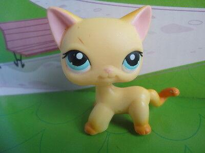 Littlest Pet Shop LPS RACEABOUT RANCH CAT 339 Orange Shorthair Blue Eye ORIGINAL