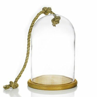 "Terrarium Taxidermy 1 piece Display Clear Glass Cloche Dome H-12/"" D-12/"""