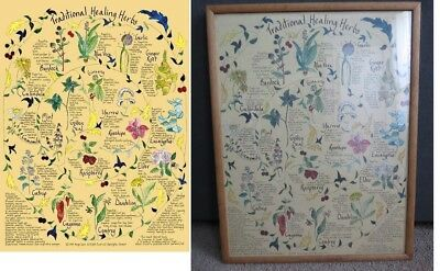 """MARGO DAVIS CULINARY HERBS//WATERCOLOR PRINTED POSTER 18/"""" X 24/"""" ARTIST"""