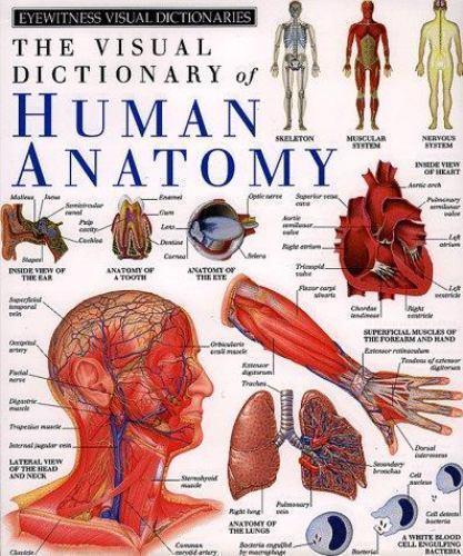 DK Visual Dictionaries: The Visual Dictionary of Human Anatomy by ...