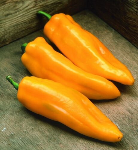 SWEET and COLOSSAL! Marconi Golden Pepper seeds 5