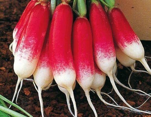 Radish kiwi Seeds 3 g Редис Киви S1168 Farmer/'s dream