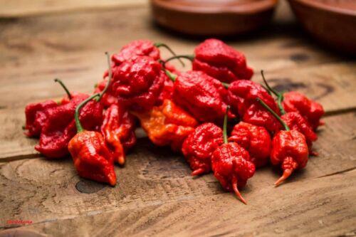 100 Graines Carolina Reaper  , The World's Hottest Pepper seeds