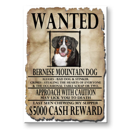 BERNESE MOUNTAIN DOG Wanted Poster FRIDGE MAGNET Berner
