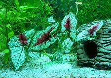 Künstliche Wasserpflanze Aquarium Plastik 13 cm x 20cm  sehr realistisch mit rot