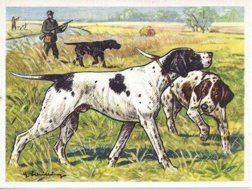 Rare 1952 Dog Art Austria Tobacco Company Trade Card ENGLISH POINTER
