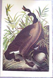 canada goose shop amsterdam