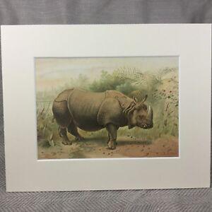 1894-Rhino-Print-Indian-Rhinoceros-Rhinos-Natural-History-Antique-Original