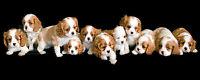 CAVALIER KING CHARLES SPANIEL ENGLISH TOY CKCS DOG ART PRINT - Puppies in a Row