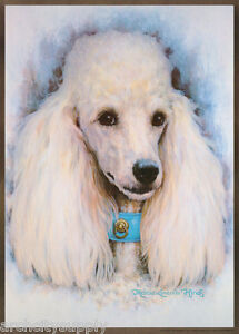 POSTER: ART DRAWING: POODLE by  MARCIA L. HINDS - FREE SHIPPING  #14-745  RP72 L