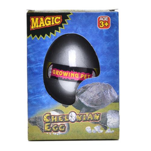 Magic Hatching Dinosaur Egg Growing In Water pets Children Kids Gift ToyAnimalPl