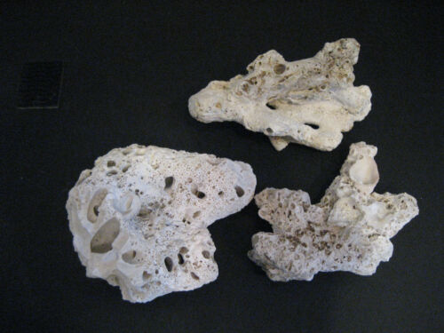 3 Large Fossilized Sea Coral Natural White From Gulf Waters