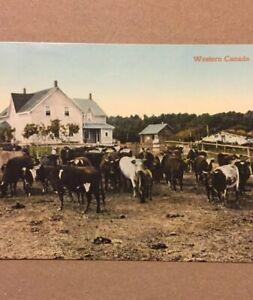 Postcard-Western-Canada-Homestead-1914-Alberta-Canada-Vintage-P21
