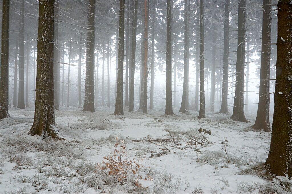 3D Natur Natur Natur Schnee Wald Wiese 9255 Fototapeten Wandbild BildTapete AJSTORE DE Lemon | Export  | Moderne und elegante Mode  | Zart  d5a027