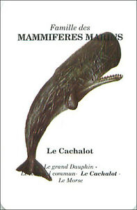 PLAYING-CARD-CARTE-A-JOUER-Grand-cachalot-Physeter-catodon-Sperm-whale