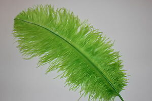 50 LIME GREEN BLONDENE OSTRICH FEATHERS FIRST GRADE 350-400MM (14-16 INCH)