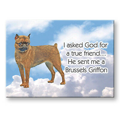 BRUSSELS GRIFFON Property Laws MAGNET No 1 Steel Cased