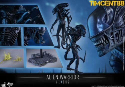 Hot Toys MMS354 Aliens Alien Warrior 1//6 Collectible Figure 35cm New Ready