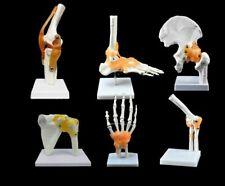 Anatomical Human Skeleton Joint Model Knee Elbow Foot Hand Medical Anatomy